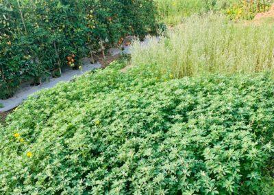 Gree-leafs